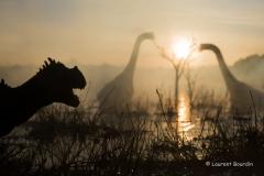 Lever de soleil sur un marais du Jurassique